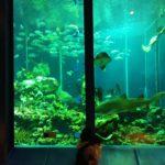 静岡市,観光,水族館,サメ,クマノミ,メガマウス,ふれあい,東海大学海洋科学博物館