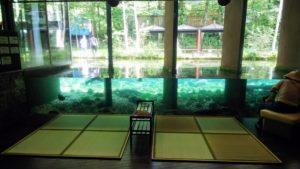 【山梨県 観光】森の中の水族館 山梨県立富士湧水の里水族館