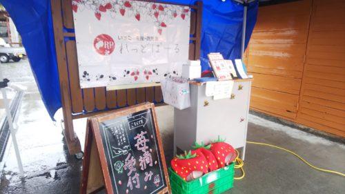 富士宮市 いちご狩り れっどぱーる ダヤンテールblog